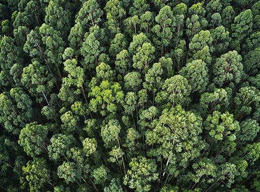 Ambiental Advocacia - Plano Start